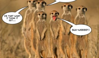 internet marketing list 2 - even the meerkats are excited