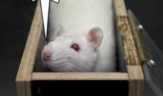 rat-justwantscheese