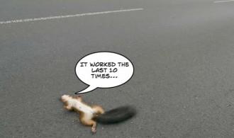 deadsquirrel