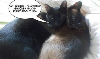romulus and isis - my cats