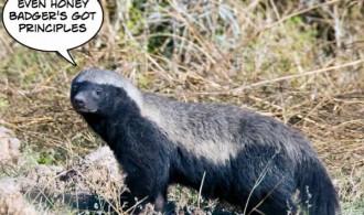 honey-badger-principles