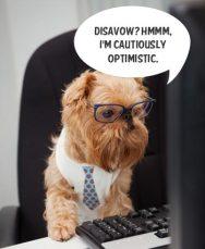 Disavow Link Tool dog