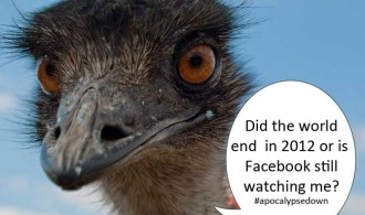 Ostrich Social Media Year-in-Review