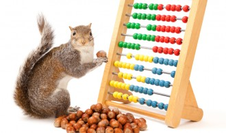 A squirrel comparing a nut to an abacus.