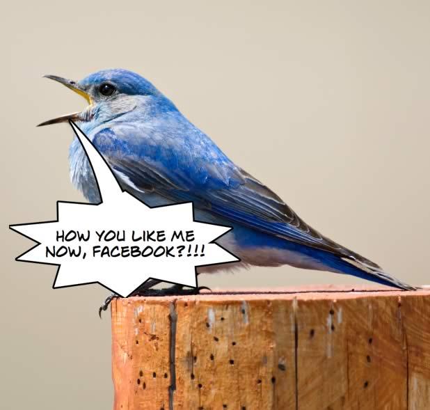 The bluebird of TWTR (not)