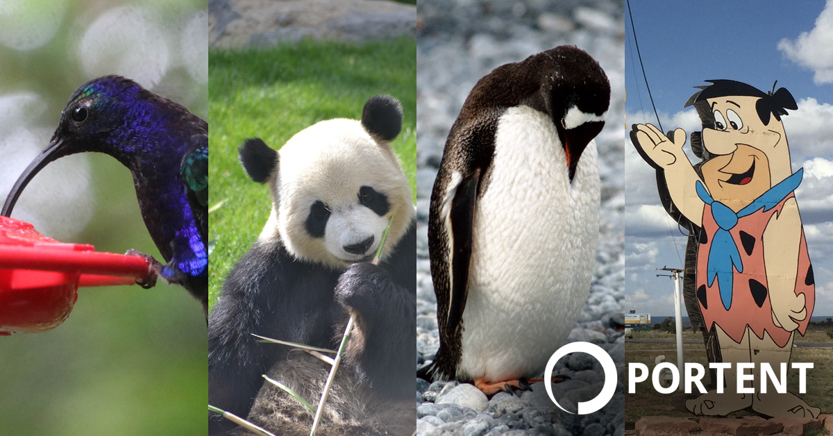 Hummingbird, Pigeon, Panda, Penguin, and Fred: A Layman's Guide to Google Algorithm Updates