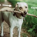 What to do with your keyword research like a dog that finally got the giant stick